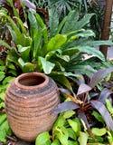 Gliniana Ceramiczna Dekoracyjna waza z Zielonymi roślinami Zdjęcie Royalty Free