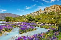 gliniane falezy nowy rezerwowy sceniczny Zealand Zdjęcia Stock