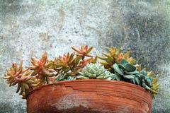 Gliniany Flowerpot sukulenty Zdjęcia Stock