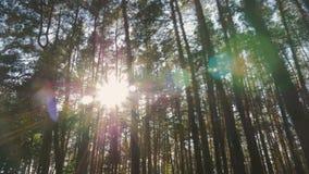 Glint da luz solar através das árvores video estoque