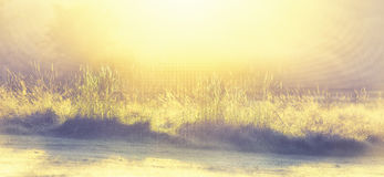 Glinting låg vinkel Januari Frosty Morning för gräs Arkivfoton