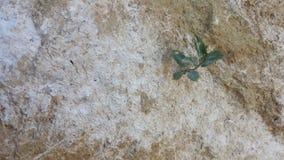 Gliny skały warstwy zdjęcie royalty free