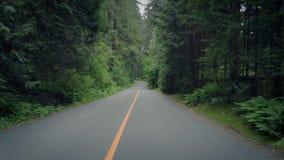 Glissement le long de la route rayée par arbre banque de vidéos