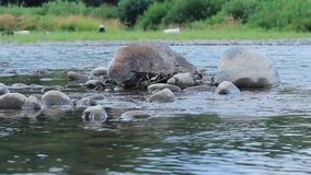 Glisseur tiré d'une rivière banque de vidéos