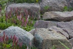 Glissière alpine Photos libres de droits