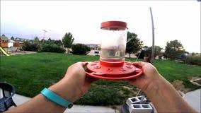 Glissière de colibri banque de vidéos