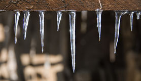 Glistening icicles Royalty Free Stock Photo