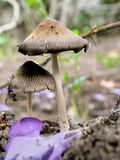 Glistening Ink Cap  Royalty Free Stock Photos