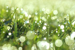 Glistening Fresh Morning Dew On Grass. Close up glistening morning dew on grass royalty free stock photography