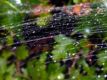Closeup of a spider web on a damp morning royalty free stock image
