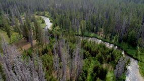 Glistens di luce solare fuori di piccola corrente come conduce attraverso una regione selvaggia della foresta stock footage