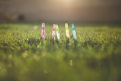 Glitter in Grass Stock Photography