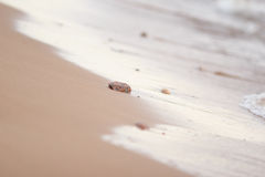 Glitter of wave and the sleek sand stock images