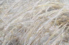 Glittering Ice Covered Blades in Snow Stock Photography