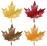 Glittering Maple Leaves Royalty Free Stock Images