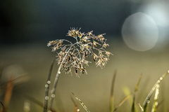 Glittering plant Stock Photography