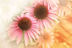 Glittering sunflower in soft style background Royalty Free Stock Images