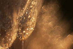 Shiny dewdrop Royalty Free Stock Photography