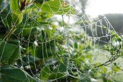 Glitzerndes Spinnennetz Stockbilder