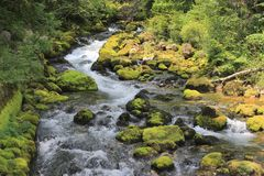 Gljun小河,朱利安阿尔卑斯山,斯洛文尼亚 库存照片