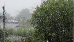Global climate change. summer snow. Falling on the background of green trees in the city view from the window stock footage