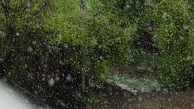 Global climate change. summer snow. Falling on the background of green trees in the city view from the window stock video footage