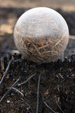 Global concept early spring fires and burnt grass Royalty Free Stock Image