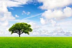 Global Environment Stock Photo