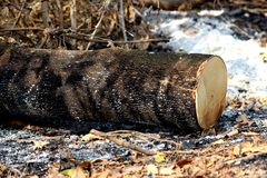 Global uppvärmning kalhugger klungan av nytt klippta trädstubbar och bränner Arkivbilder