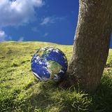 Global warming. Close up shot of a tree and globe Royalty Free Stock Photo