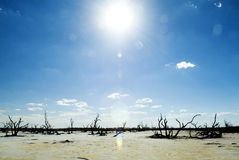 Global Warming. Dead tree trunks and limbs on a white salt lake under blue sky and harsh sun stock photography