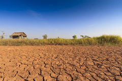 Global warming causes less rainfall due to drought. But also other plants trying to grow up stock image