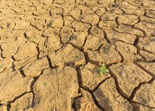 Global warming causes less rainfall due to drought. But also other plants trying to grow up royalty free stock photos