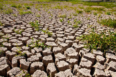 Global warming concept of cracked ground Stock Photos