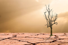 Global warming concept.dead tree on cracked desert Stock Image