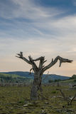 Global warming concept, dead tree Stock Image