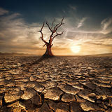 Global warming concept. Lonely dead tree under dramatic evening. Sunset sky at drought cracked desert landscape Stock Photography