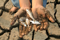Global warming dead fish on hand Stock Photo