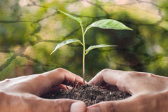 Free Global Warming Theme,hands Holding And Caring A Young Plant Stock Photos - 55584153