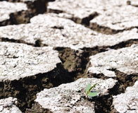 Global warming theme hot dried earth floor background Royalty Free Stock Photo