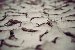 Globale Erwärmung trockenes Wüstenboden-Totes Meer Israel lizenzfreies stockfoto