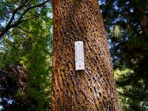 Globale Erwärmung-Wald stockfoto