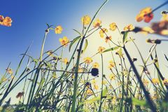 Globalflowers and green grass under blue sky. Beautiful globalflowers and green grass under blue sky Royalty Free Stock Photography