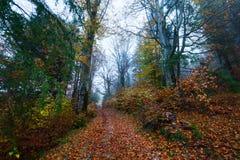 globalne ocieplenie duże krajobrazowe halne góry Chmury i mgła Zdjęcie Royalty Free