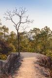 globalne ocieplenie pojęcia Osamotniony nieżywy drzewo pod dramatycznym wieczór zmierzchu niebem przy susza pękającym pustynia kr Zdjęcie Stock