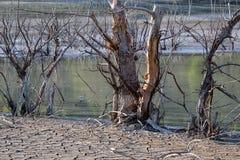 Globalnego nagrzania pojęcie, nieżywy drzewo Obrazy Royalty Free