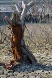 Globalnego nagrzania pojęcie, nieżywy drzewo Fotografia Stock