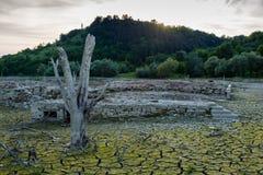 Globalnego nagrzania pojęcie, nieżywy drzewo Zdjęcia Royalty Free