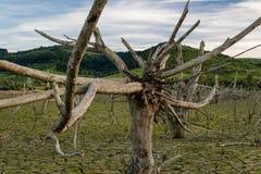 Globalnego nagrzania pojęcie, nieżywy drzewo Zdjęcie Royalty Free