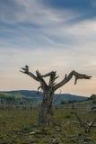 Globalnego nagrzania pojęcie, nieżywy drzewo Obraz Stock